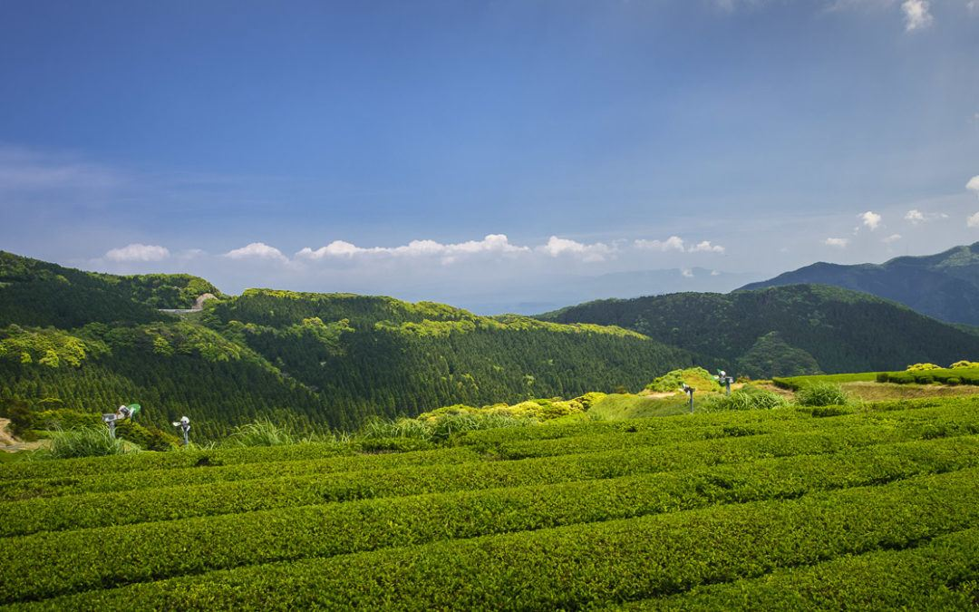Chiran Tea Association