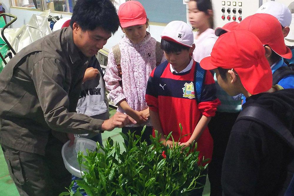 Teaching Green Tea Preparation To Schoolchildren