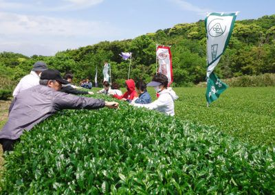 green_tea_ownership07