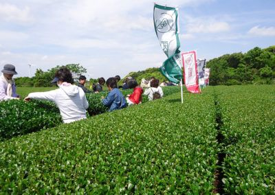 green_tea_ownership08